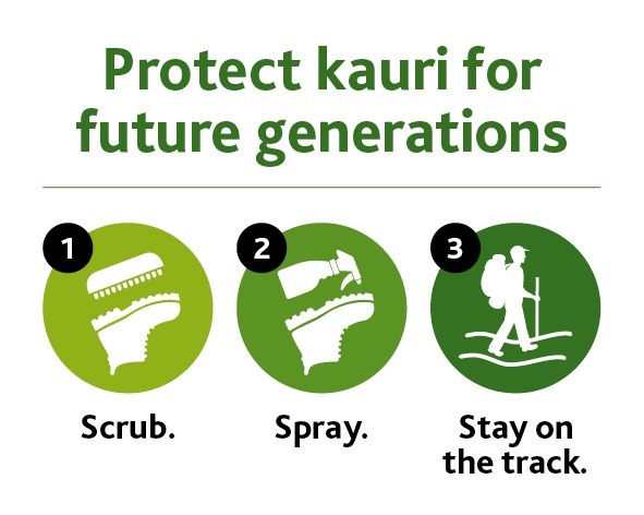 Kauri dieback three steps sticker