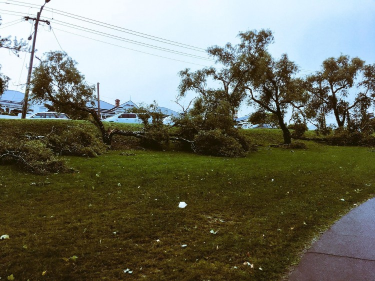 Trees damaged by a storm.
