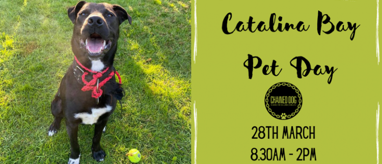 Catalina Day Pet Day
