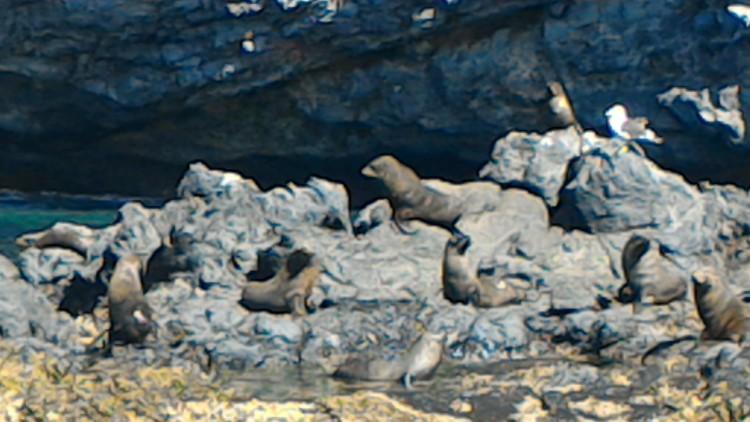바위위 물개들